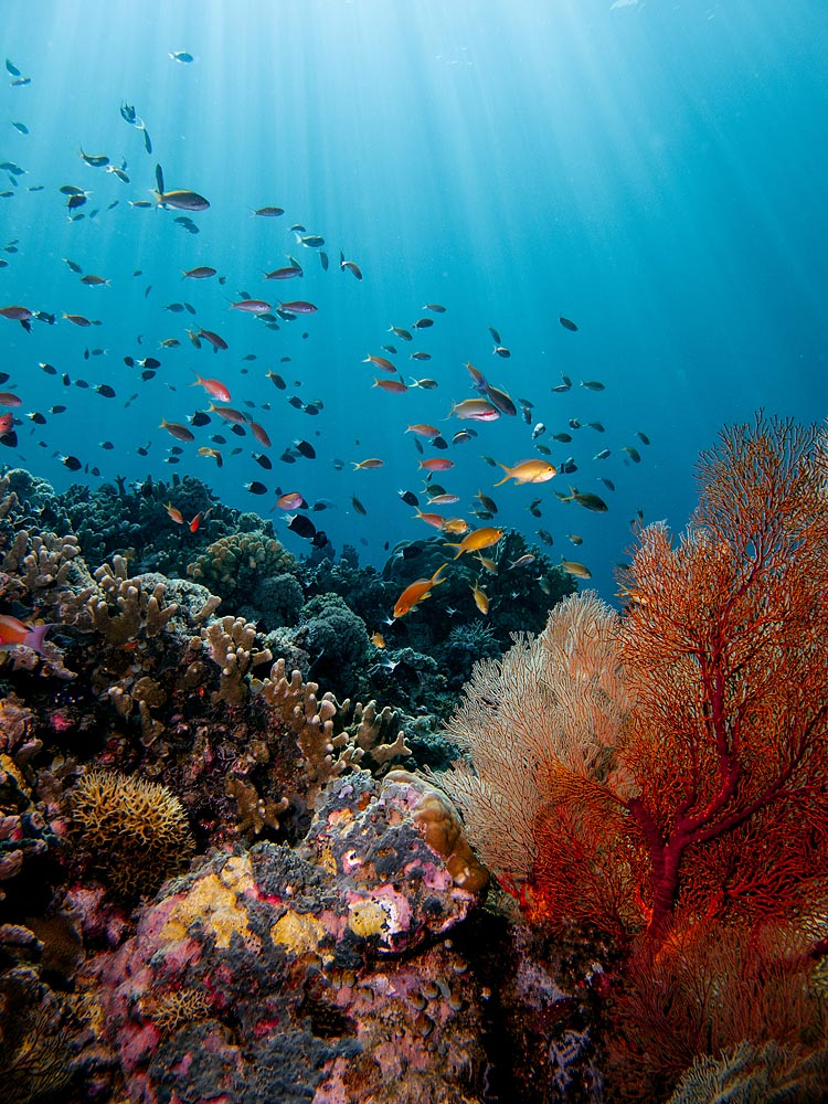 underwater coral reefs tubbataha paradise tropical fish dive nemo finding tommyschultz