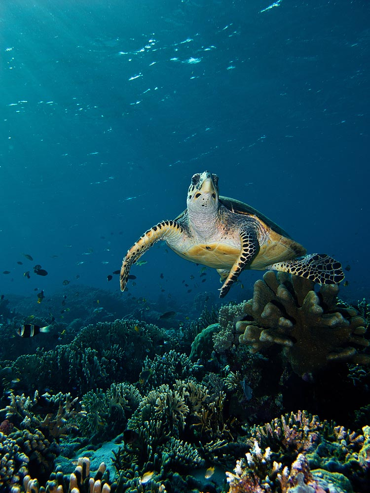 Komodo Dive Safari: Beautiful Underwater Photos from