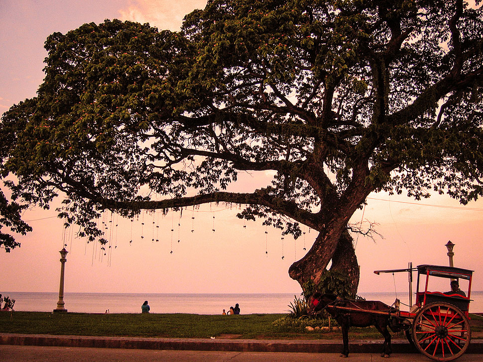 The Scenic Rizal Boulevard Boardwalk is one of the highlights of visiting Dumaguete
