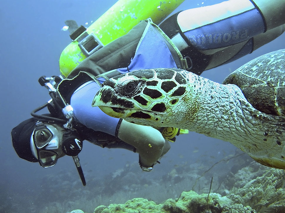 Swimming with a Hawksbill Sea Turtle on Scuba Dive at Apo Island