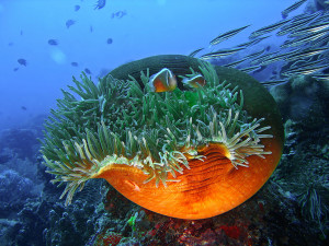 Underwater Photography from Apo Island near Dumaguete