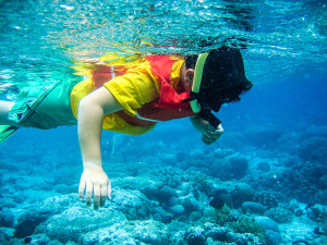 Snorkeling the clear blue waters of the Apo Island Marine Sanctuary
