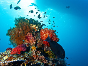 Underwater Photo of a beautiful Coral Reef from Komodo National Park