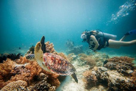 Snorkeling with Sea Turtles on Gili Trawangan