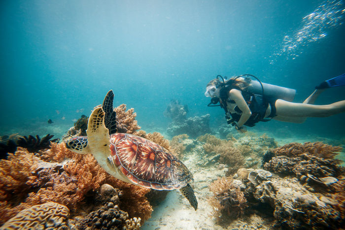 Snorkeling with Sea Turtles on Gili Trawangan