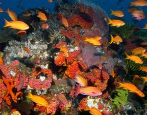 Apo Island Dive Trip: Best Underwater Photos
