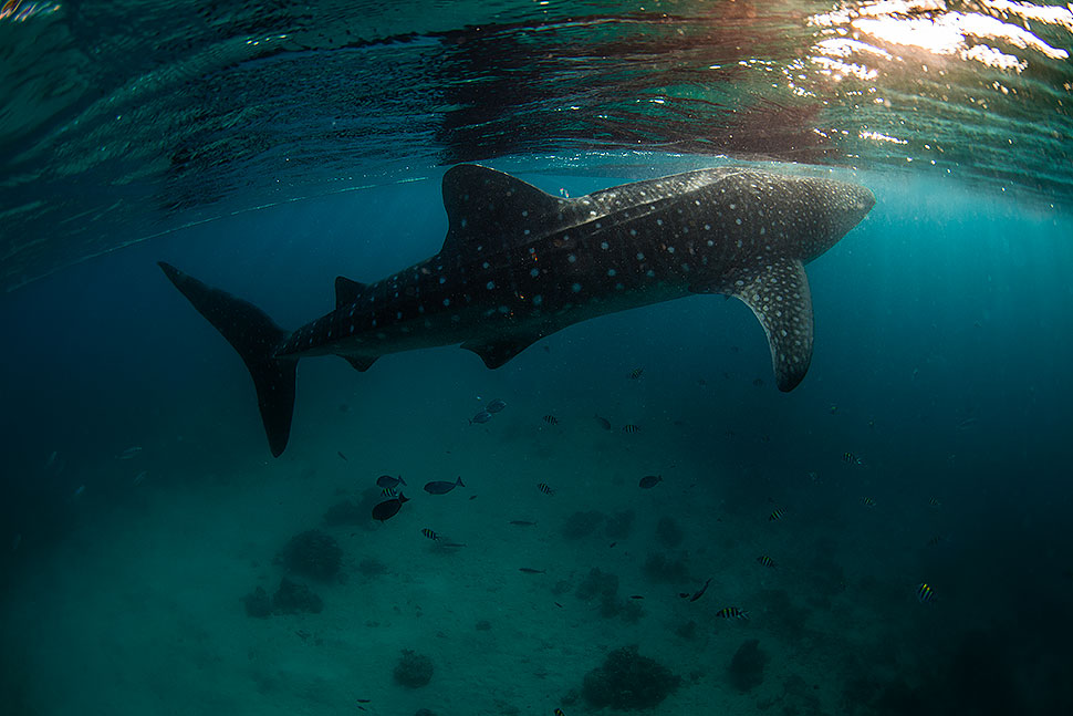 Dumaguete Underwater & Travel Photo Safari - August 2014