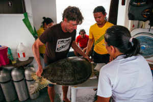 Tagging a green sea turtle at the Tubbataha UNESCO site in Palawan