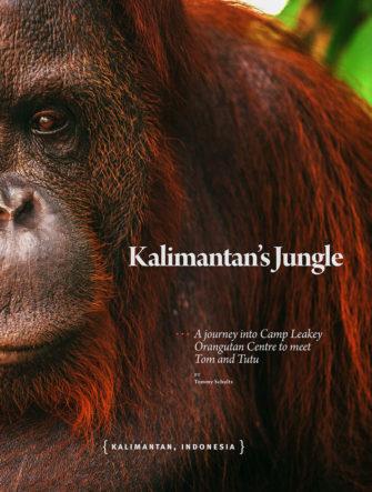 Orangutans of Borneo Feature | Asian Geographic Magazine