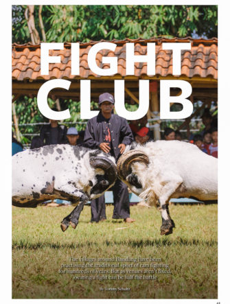 Ram Fights in Java | SilkAir Airlines | SilkWind Magazine | Bandung Travel