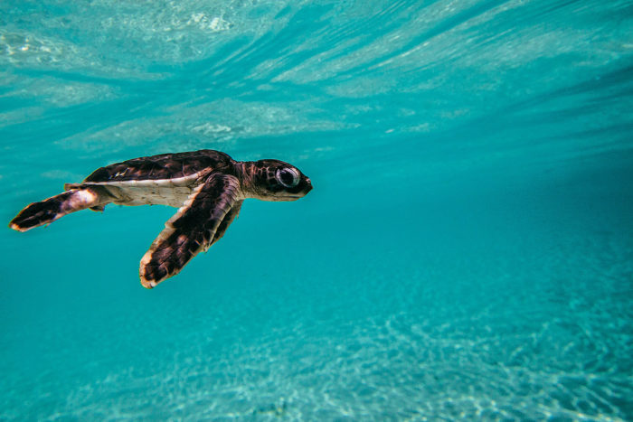 Sea Turtle Underwater Photo Gallery: Best Photos from the World's Best Reefs