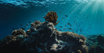 East of Flores Underwater Photos: Seven Seas Liveaboard Trip