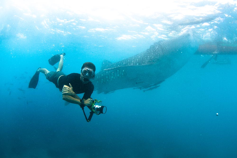 Swimming With Whale Sharks Underwater Photography Gallery