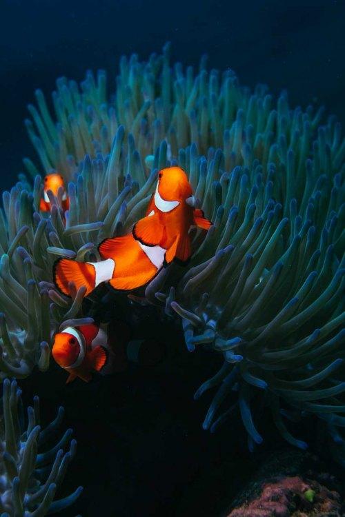 Nemo Family