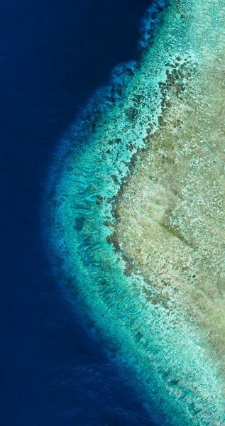 Coral Crescent