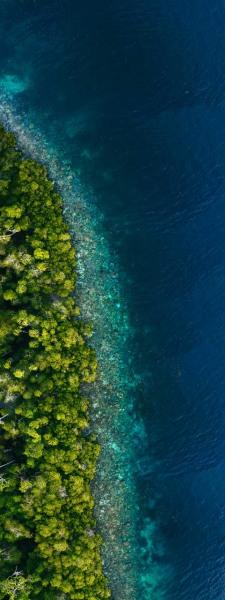 Rainforest Reef