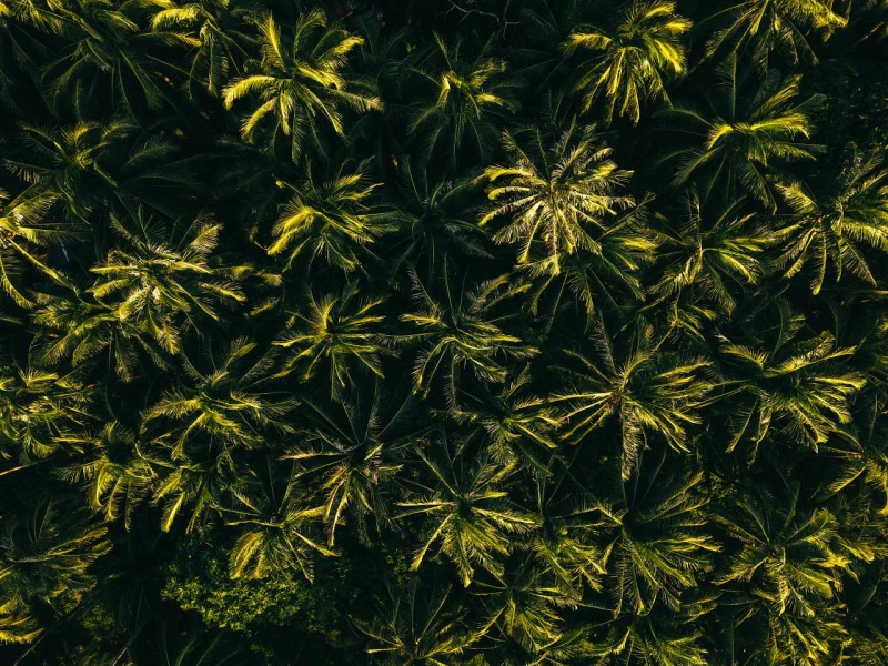 Palm Tree Aerial Abstract