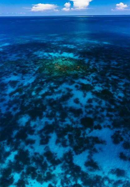 Coral Blues
