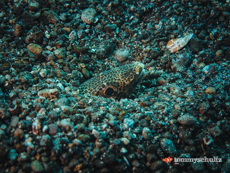 East of Flores Underwater Photos: Seven Seas Liveaboard Trip
