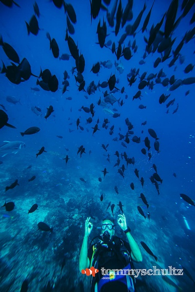 Diving the Deep Blue of Komodo Park - Seven Seas Liveaboard Dive Trip