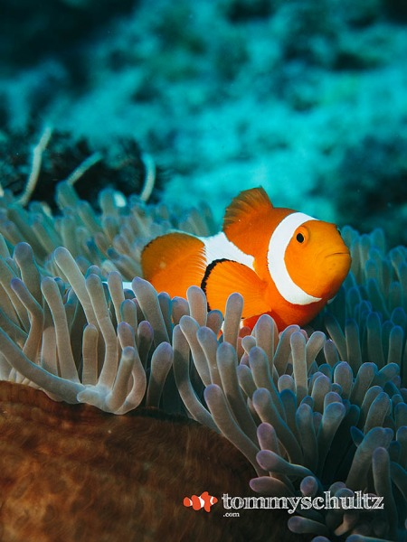 Komodo Coral Reefs: Finding Nemo in the Land of the Dragon