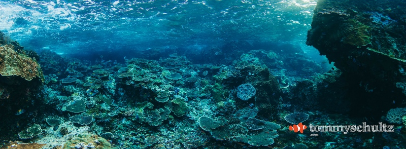 Komodo Coral Reefs: Wide Angle Views of the Coral Triangle