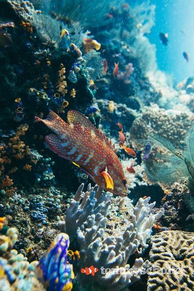 Corals in Raja Ampat: Underwater Photo Gallery