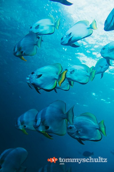 Schools of Fish in Raja Ampat: Wide Angle Gallery
