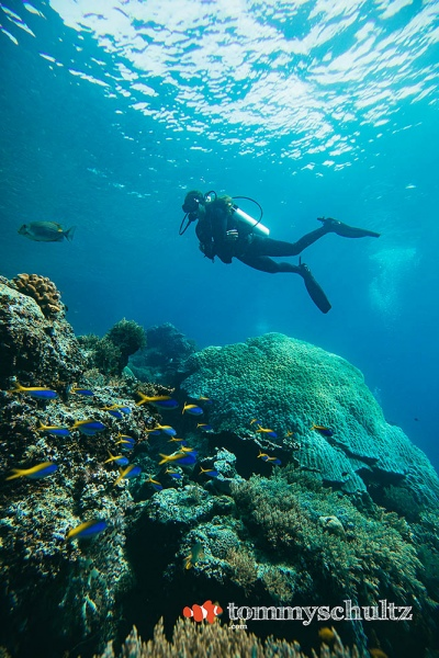 Raja Ampat Coral Reefs Wide Angle: Panoramic Views of Indonesia's Underwater Paradise