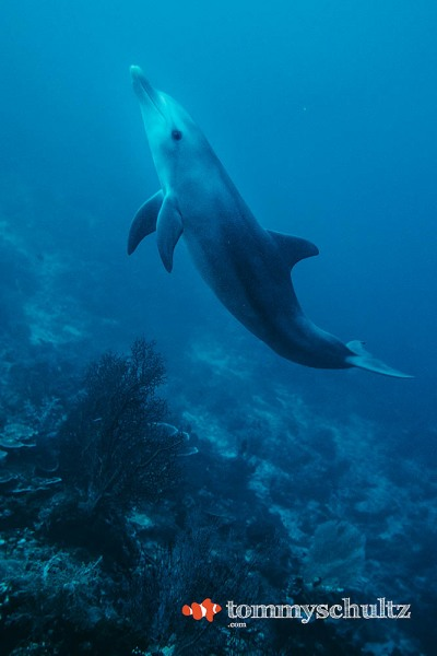 Diving with Dolphins in Raja Ampat: The Best Dive of My Life