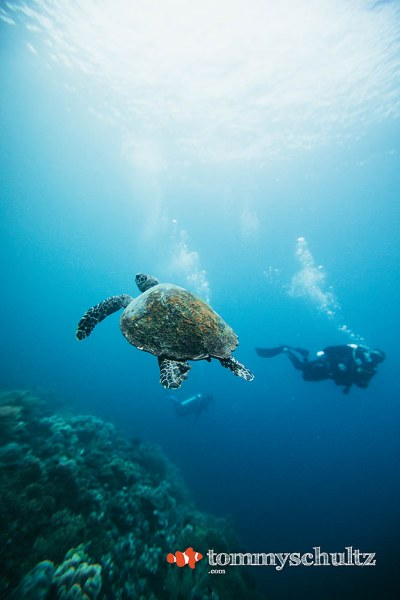 Sea Turtles in Raja Ampat: Underwater Photo Gallery