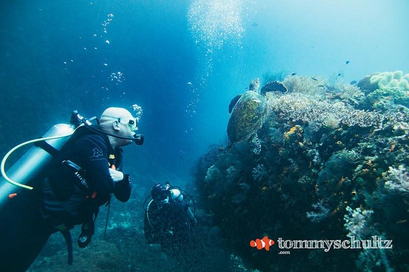 Sea Turtles in Raja Ampat: Underwater Photo Gallery