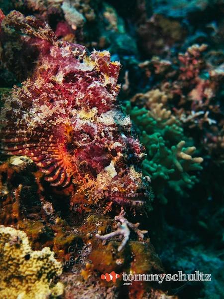 Tropical Fish in Raja Ampat: Underwater Photo Gallery