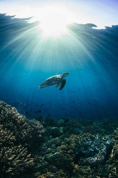 Sunrise Reef
