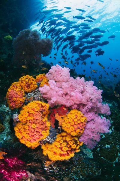 Undersea Fire