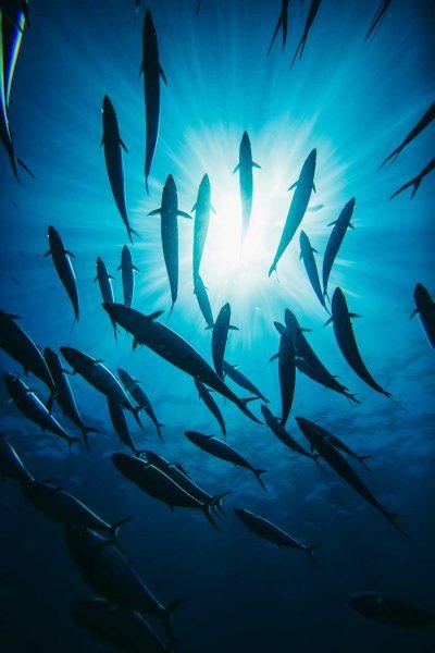 Undersea Silhoettes
