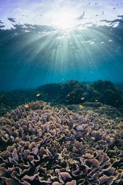 Sunburst Coral Garden