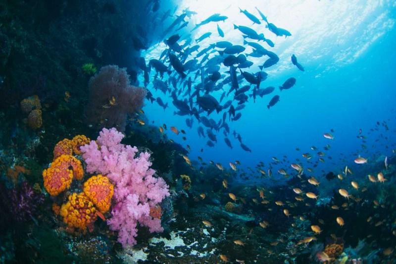 Undersea Embers