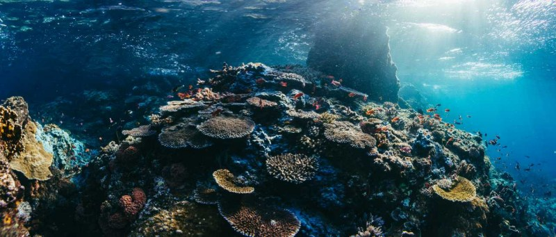 Coral Reef Panorama