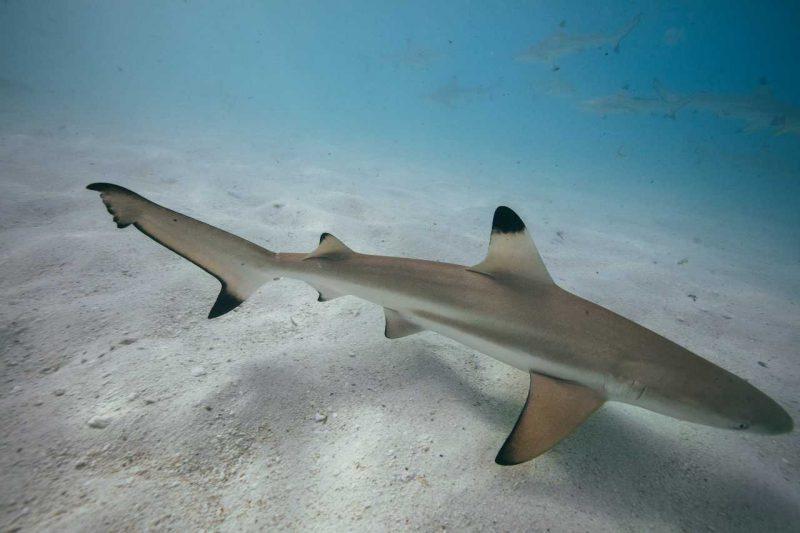 Shark Beach