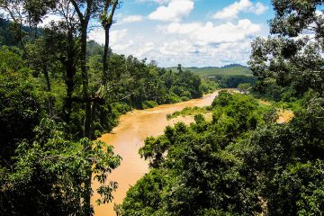 Rain Forest River View from the Taman Negara in Malaysia