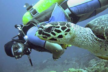 Swimming with a Hawksbill Sea Turtle on Scuba Dive at Apo Island