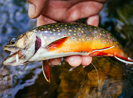The wild brook trout of Virginia's Shenandoah National Park first made me aware of environmental damage in our rivers and oceans