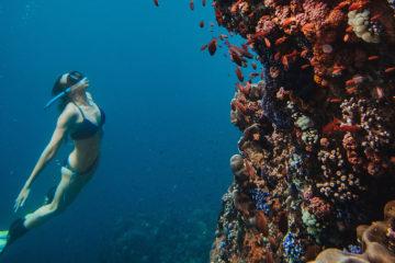 Freediving Islands East of Flores: Underwater Photo Gallery