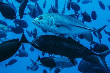 Diving the Deep Blue of Komodo Park - Seven Seas Liveaboard Dive Trip