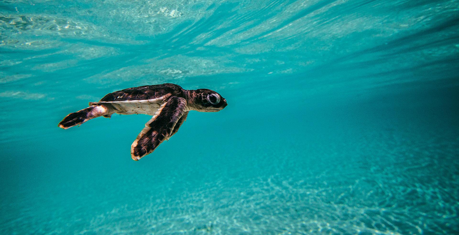 Best Underwater Fashion Photographer