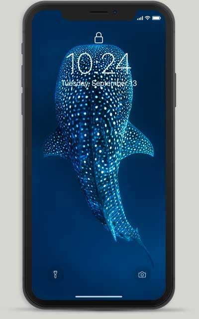 Whale Shark Constellation - Shark iPhone and Computer Wallpaper
