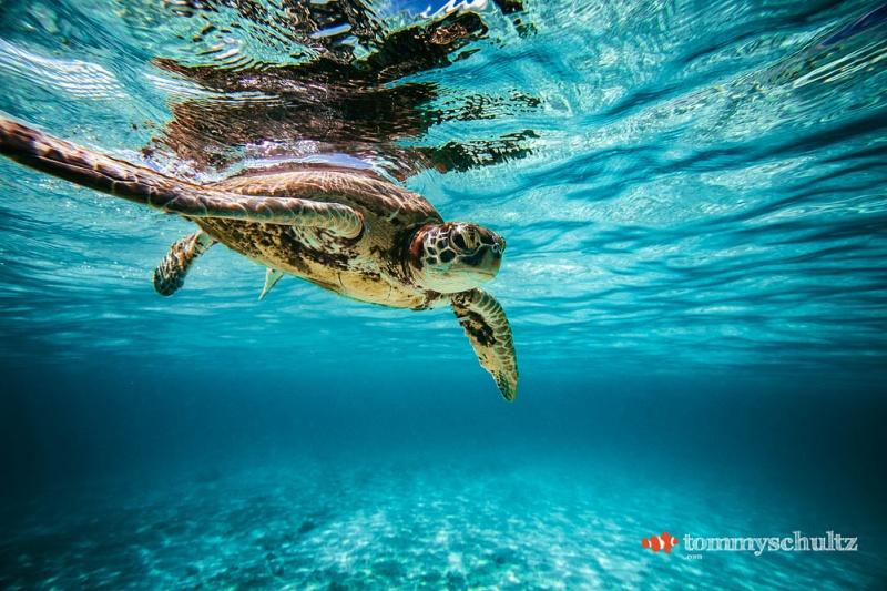 travel-underwater-surf-photography-2016-4