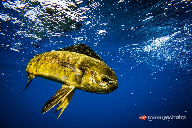 travel-underwater-surf-photography-2016-57
