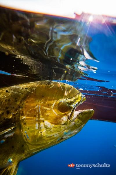 travel-underwater-surf-photography-2016-62